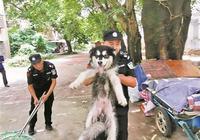 狗繩:大狗限1.2米小狗2米