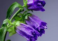 心理測試:你最喜歡哪束花,測出你跟TA的婚姻能走多遠