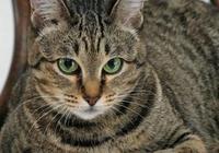 80後的童年——林林的狸花貓