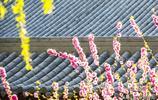 隨拍廣記:晉州魏徵公園的春天-2019