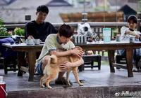 明星錯位圖盤點:吳亦凡大秀小蠻腰,何老師竟然抱狗在地上...
