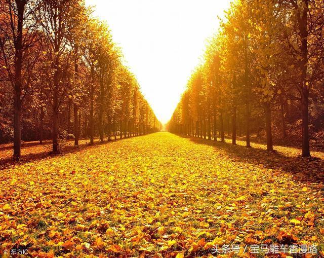 上聯:悲秋更嘆飄零葉,下聯怎麼對?
