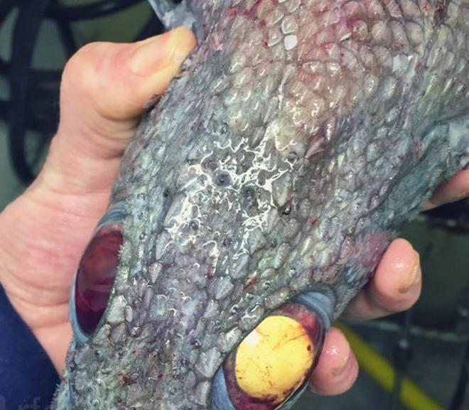 漁民深海區捕到一筐大魚,網友笑稱深海魚長得真隨便