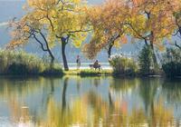 五彩斑斕秋意正濃,中山植物園開啟南京最美秋色