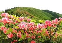 週末約!銅鼓縣萬畝高山杜鵑盛開