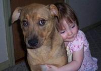 """""""擼狗""""需謹慎,當心你做的這5件事,會傷了你家狗狗的心!"""