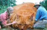 假如《侏羅紀公園》的恐龍換成貓,畫風秒變成這樣