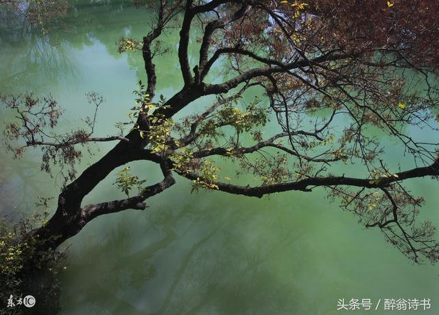 《七絕 · 深秋有感》文/花瓣雨