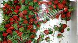 反季節銷售饞人的大草莓,三十元一斤你吃不吃?
