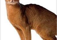 世界名貓,有你喜歡的嗎