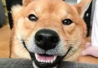 家裡有個要狗哄的鏟屎官,狗子表示心好累!