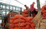 山東大西洋土豆豐收了,網友說:酸辣土豆絲馬鈴薯泥每一樣都來點