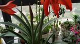 我家花兒開得正旺,只拍了10種花,個個開得豔,個個讓人愛