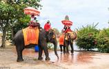 """拒絕泰國""""騎大象""""體驗項目,中國遊客:堅持把騎大象改成喂大象"""