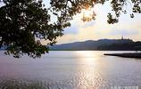 杭州西湖荷花分為13個區塊 其中麴院風荷的荷花最為著名