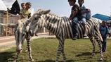 痛心疾首,動物園的真相,為了利益,有時候動物才是最大的受害者
