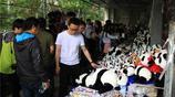 走進成都大熊貓之家 看萌翻了的國寶