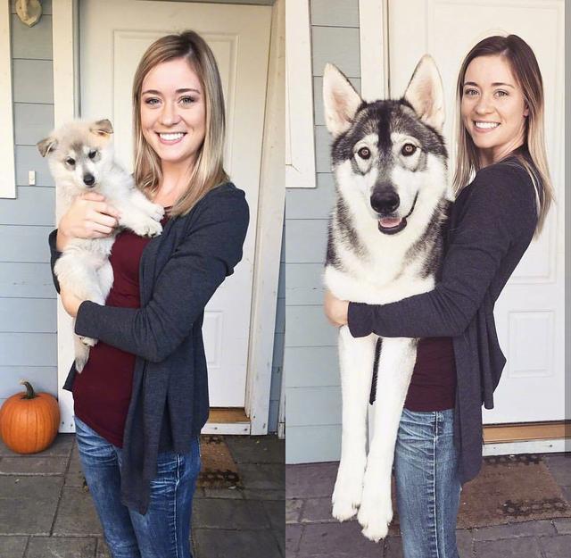 還記得你家狗狗當初被你領回來的模樣嗎?