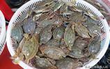 梭子蟹皮皮蝦長大了價格也相應上漲,酒店大帶魚價格268元一斤