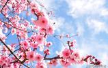春天的美好,一半靠所見,一半靠所想