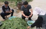 大學生看城裡人到村裡挖野菜,回家鄉種植野菜,年利潤超過80萬元