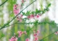 桃紅柳綠今又春,切莫辜負景色美。