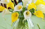 歐美國家新娘捧花的常用花-馬蹄蓮