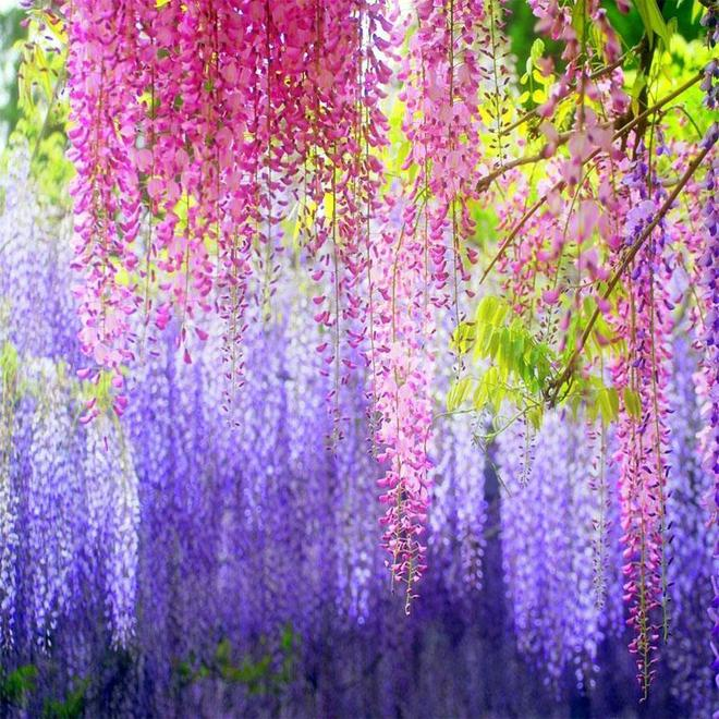 喜歡養花的注意啦!這10種花,冬天越澆越死,不管才長得旺盛