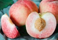 向大家推介大有商機的16個桃樹新品種!桃樹品種的特點