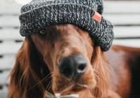 養狗要如何保持室內環境衛生?狗狗自身的清潔問題要注意哪些