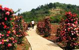行走的風景—— 好驚豔!陶源溪谷一樹竟開兩色花