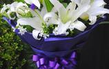 百合花中的女王 香水百合