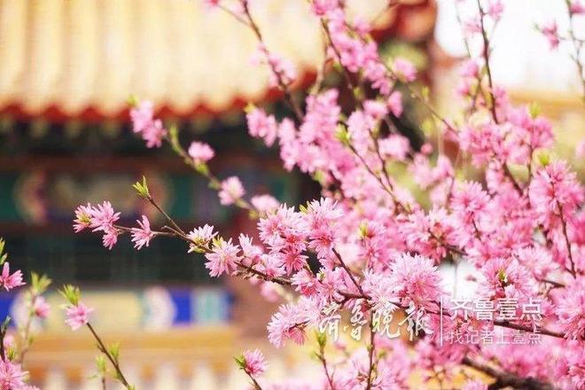 陽春三月,用鏡頭記錄你眼裡的曲園之美
