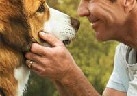 《一條狗的使命2》:萌犬貝利迴歸,看完內心都暖化了