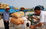 農村賺錢的小生意真不少,糧食收購又髒又累,一天下來能賺幾百元