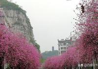 最美的四月遇到最美的柳州