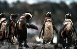環境汙染對動物的傷害
