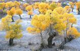 新疆沙漠胡楊林