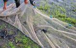 出門釣魚,涼水河遇到網魚的,搞了一盆柳根花梨棒子
