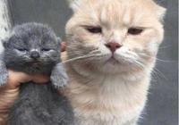 貓媽生了,但貓爸卻綠了整天悶悶不樂