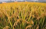 同樣不夠吃,為何我國滿世界買糧食,印度卻成糧食出口大國?