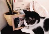主人將離世的狗照片打印出來,家貓看見後的反應,網友們紛紛掉淚