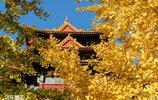 北京故宮深秋的樣子 皇家氣派中多了一份秋的意境