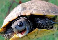 養龜的事,我們到底為什麼買龜?