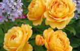 別老種綠蘿,十月新上市一批花卉,好養易打理,開花巨漂亮