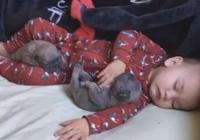 小狗和寶寶一起休息,寶寶動了一下之後,小奶狗反應萌翻全場