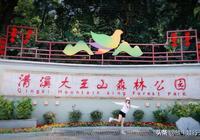 廣東東莞清溪大王山森林公園(賞禾雀花不二之選)