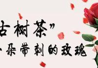 """""""古樹茶"""":一朵帶刺的玫瑰"""