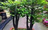 家裡放什麼盆栽好,專家告訴你這10種盆栽鎮宅旺財,福到家裡來