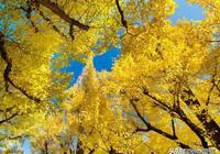 小城慢生活丨陪伴一棵樹!